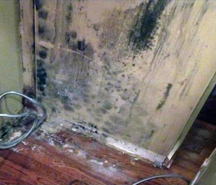 Commercial Mold Remediation In Crossville