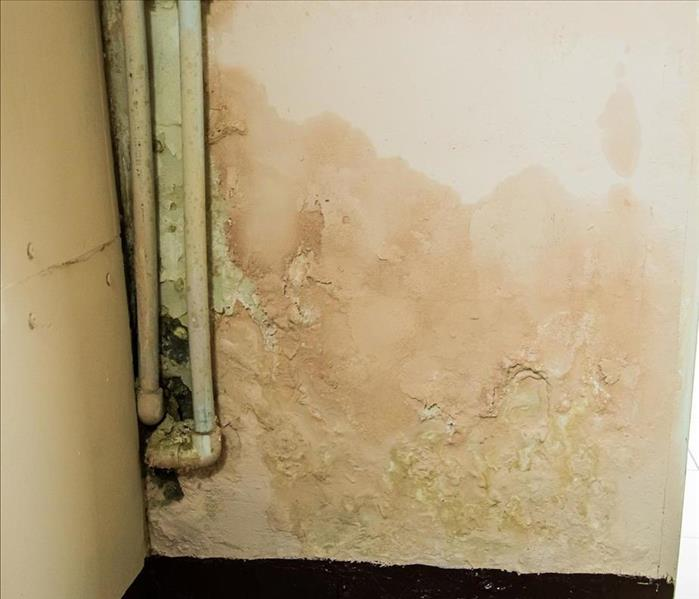 Mold Remediation Discovering Widespread Mold Damage In Your Crossville Home